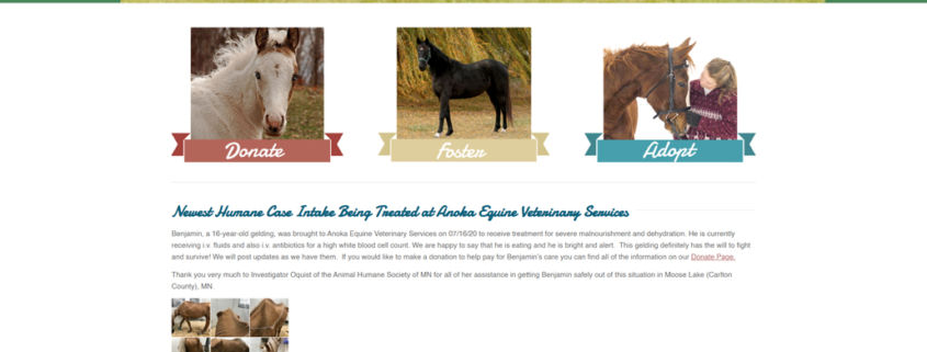 Custom WordPress website design for MN Hooved Animal Rescue home page in Zimmerman, MN